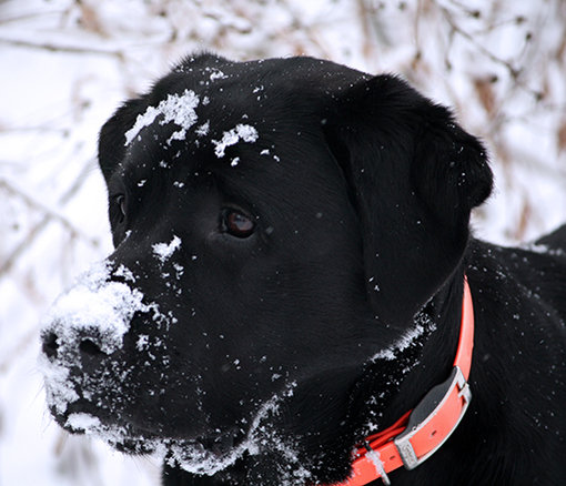 Jack likes snow