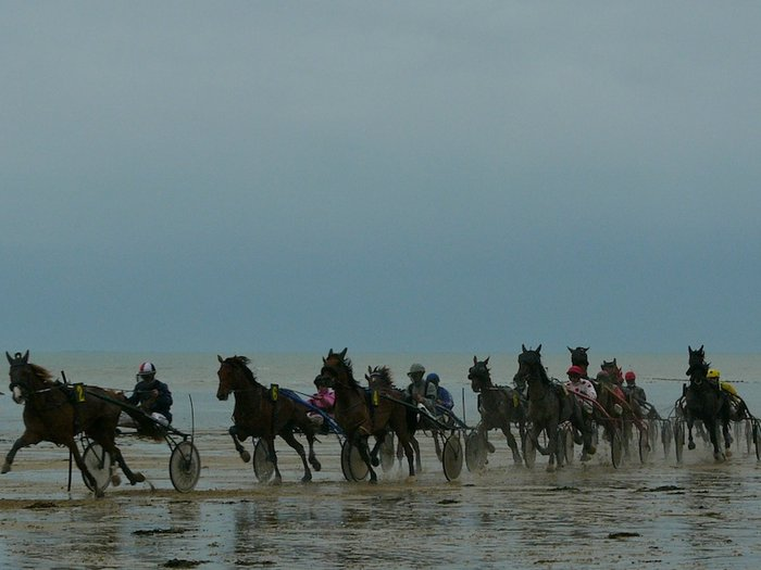 Beach horse racing..help please