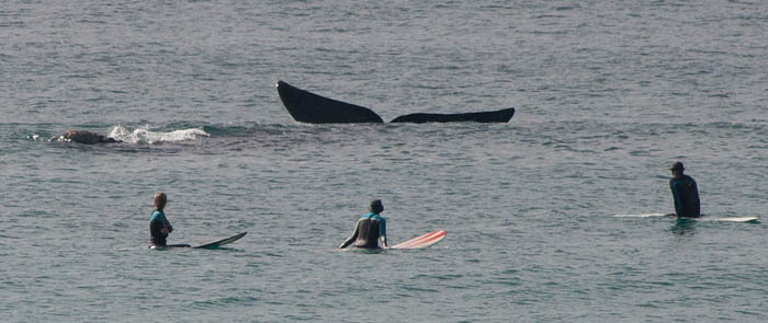 Whales :)
