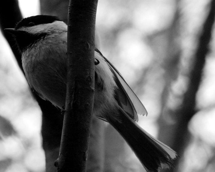 birdforschool.jpg