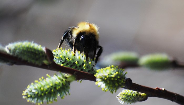 bee-crop2.jpg