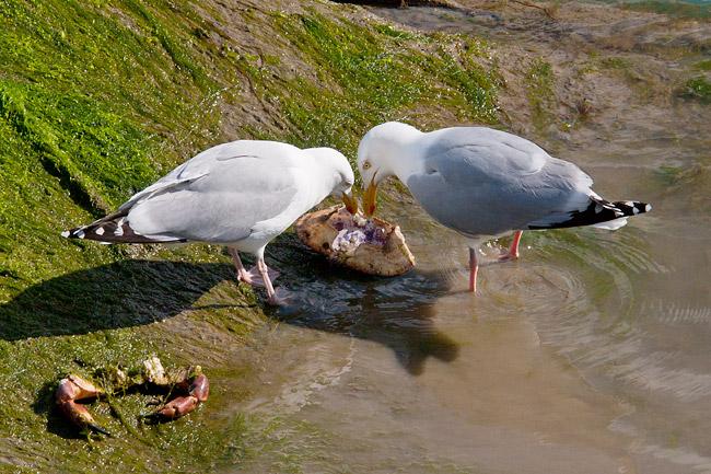 Sharing a Crab