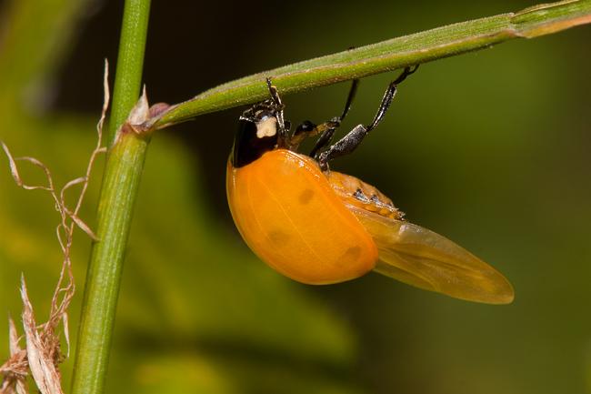 Birth of a Ladybird