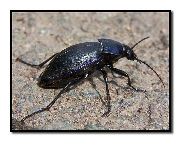 Post your insects
