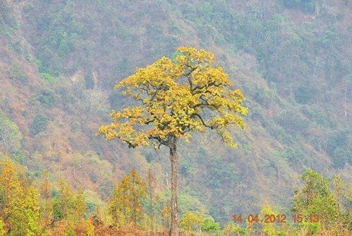 goldentree.jpg