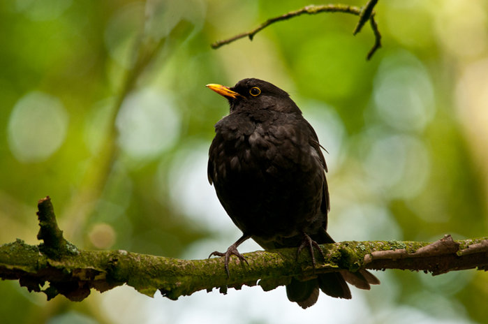 blackbird-web-version.jpg