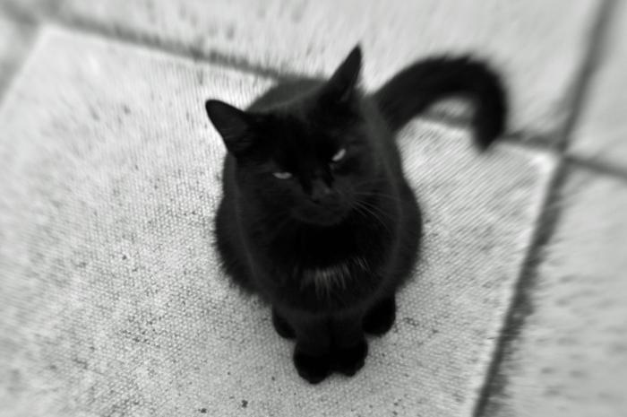 black-cat-web-version.jpg
