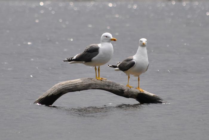 seagulls-lake-web-versio.jpg