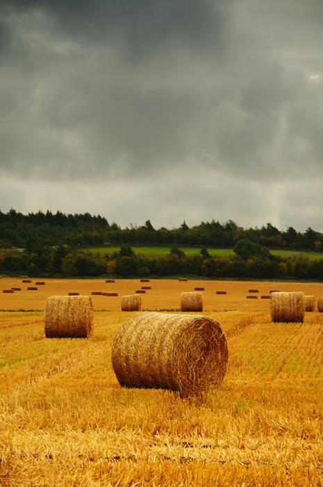 hay-roll-web.jpg