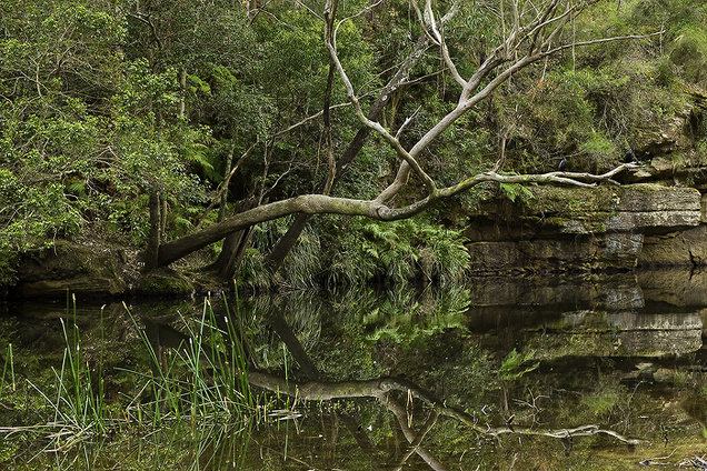 The Royal National Park - by the water.