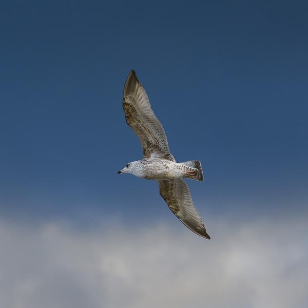 Sky Bird