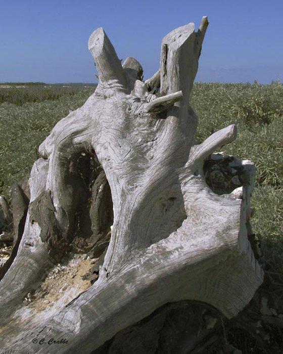 tree-stump.jpg