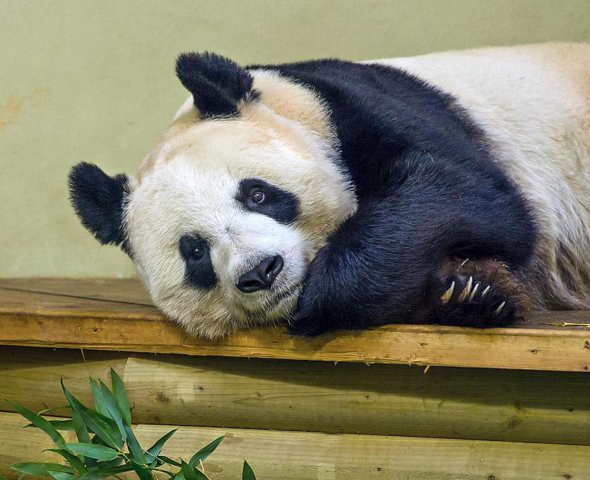 Zoo shots-C&C please