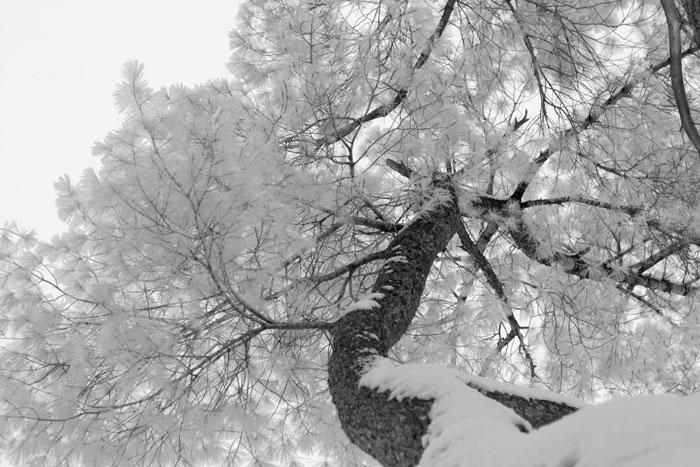 Snow and Ice (C&C always enjoyed)