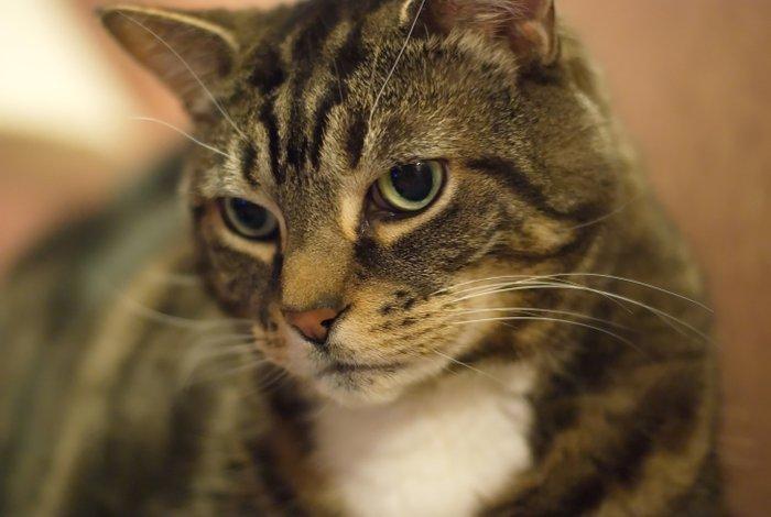 My Cat Rocky