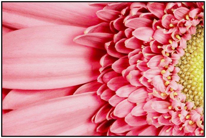 Flower C+C