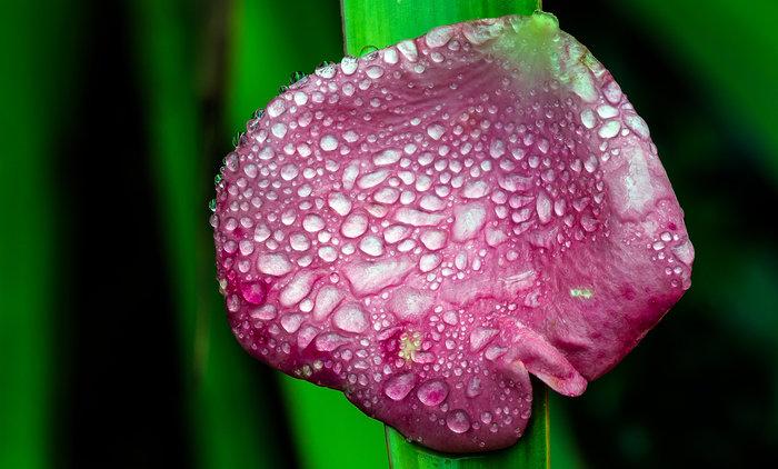 after-rain-fallen-petal_mg_7680-7693.jpg