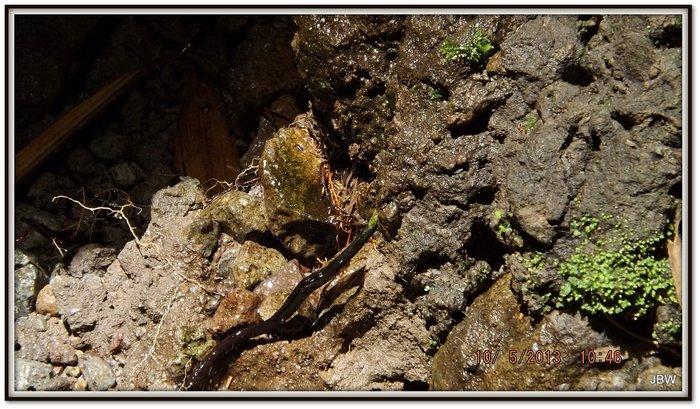 wet-rocks.jpg