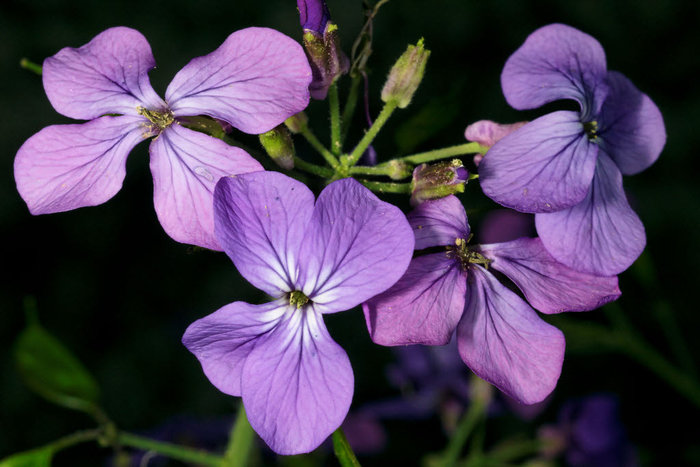 Macro Spring Flowers
