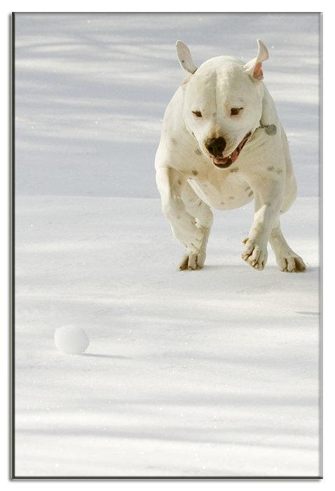 web-size-tank-redonetank-eye-ball-jan-31-2010-snow_2010jan31_0123.jpg