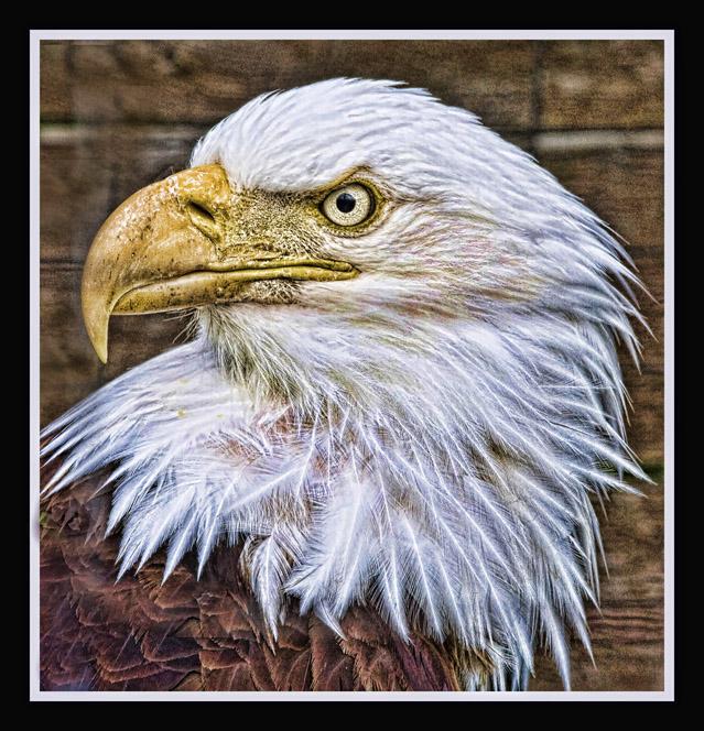 topaz-eagle-03-web.jpg