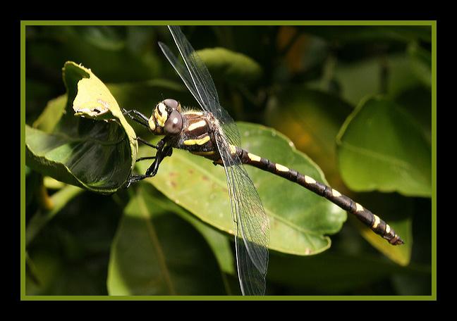 dragonfly-posting.jpg