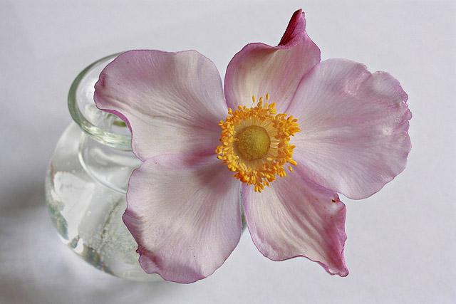 Argh! This flower!!!