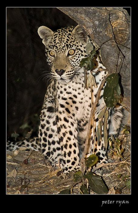 Wildlife pictures, please post!