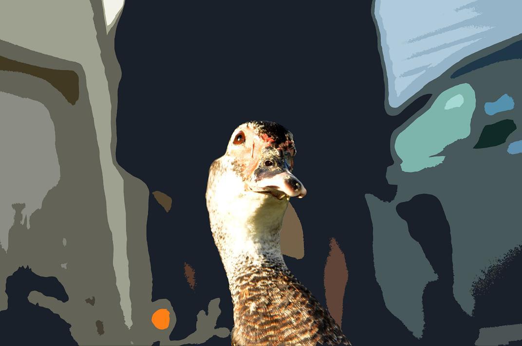 copy-duck.jpg