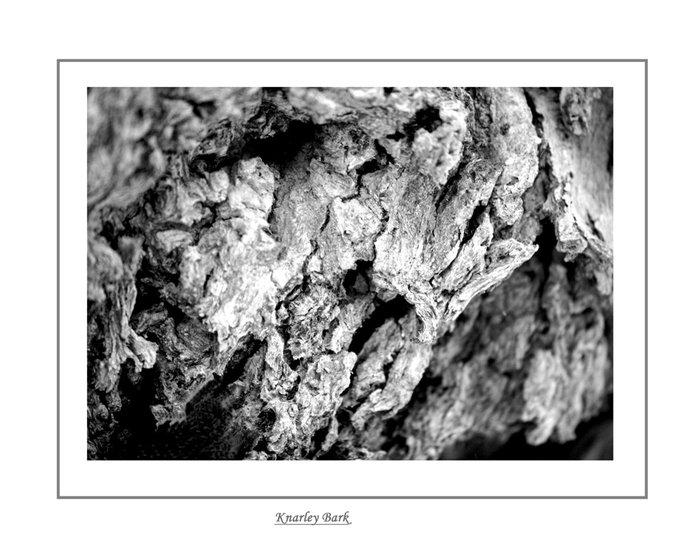 narley-bark3.jpg