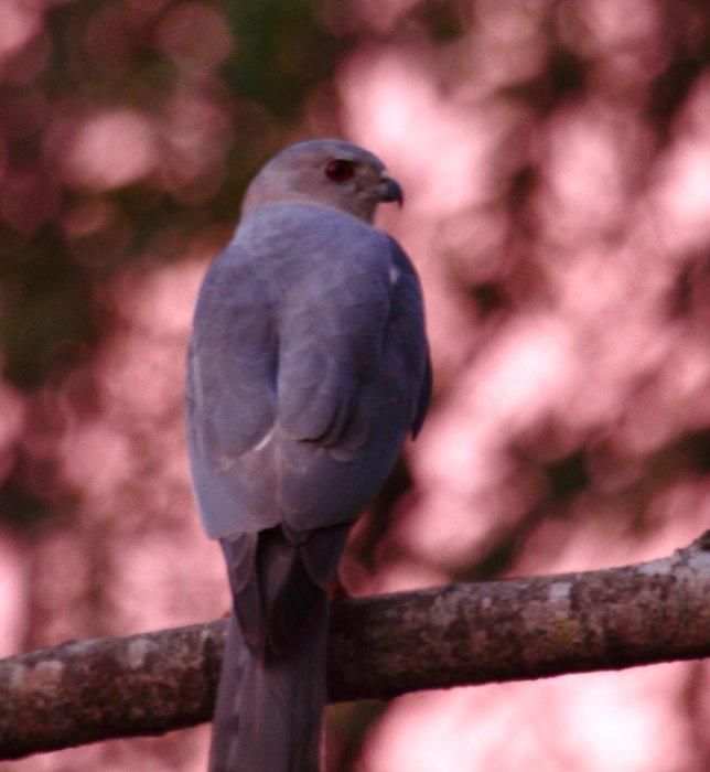 grey-bird73.jpg