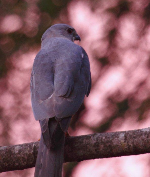 grey-bird74.jpg