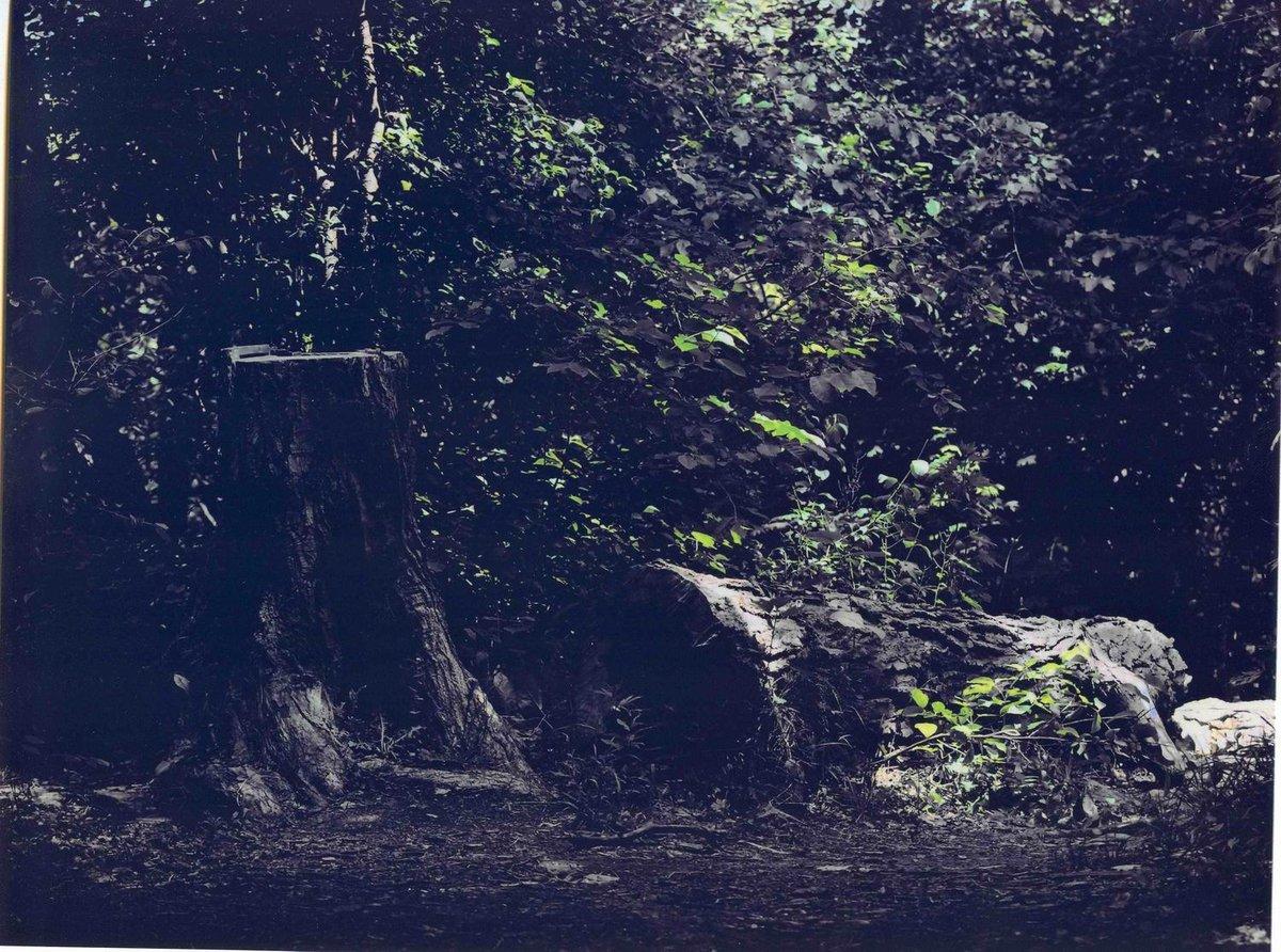 fallen-log-black-white.jpg