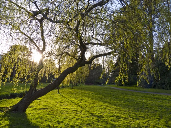 bournemouth-gardens-05.jpg