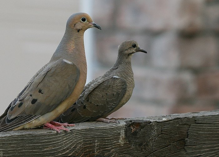 Turtle Doves - how can I make this image pop!