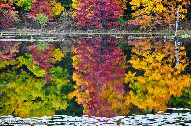 Some Fall shots at a local lake
