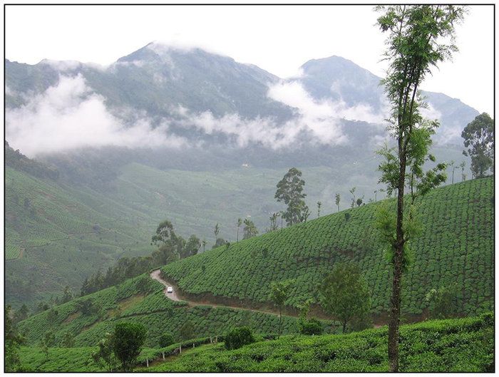 Hills of Kerala  ( INDIA )