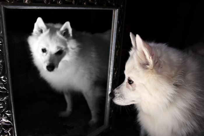 flurry-reflection-2_edited-4.jpg