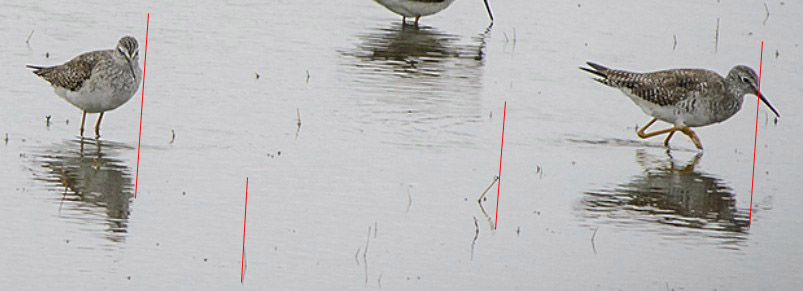 Bird Photography...Photographic Style C&C Appreciated