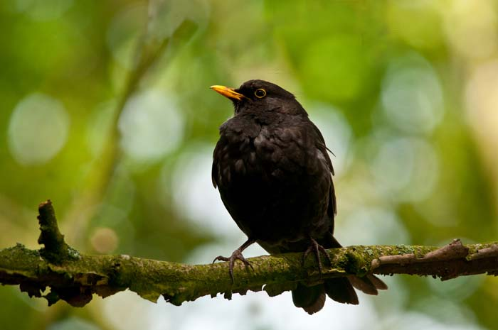 blackbird-web-version-v2.jpg