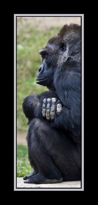 gorilla-framed-web-04.jpg