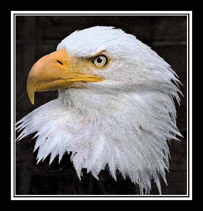 eagle-03-graphic-web-framed.jpg
