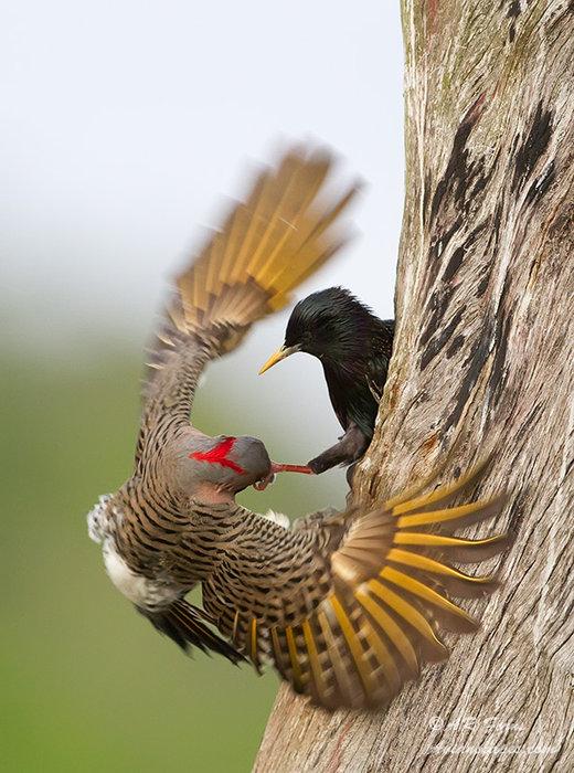 Bird Fight !!!!