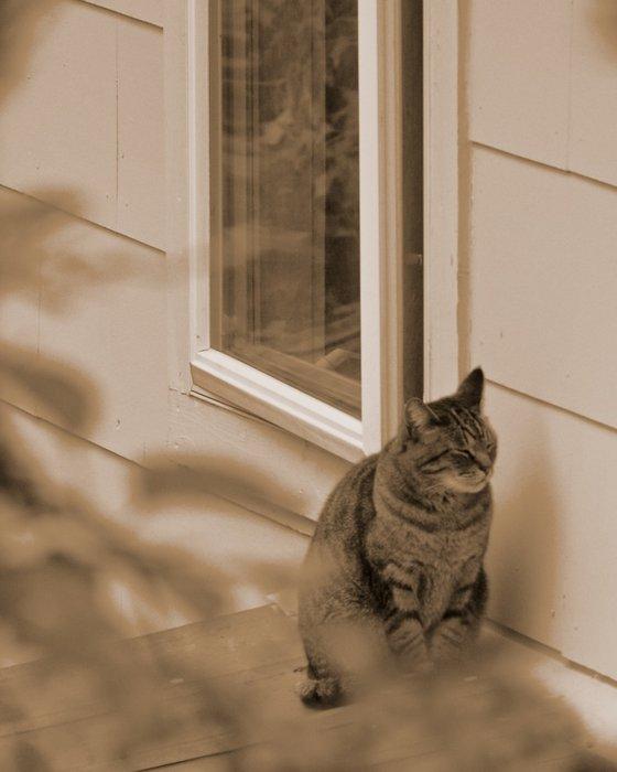 Cat next door