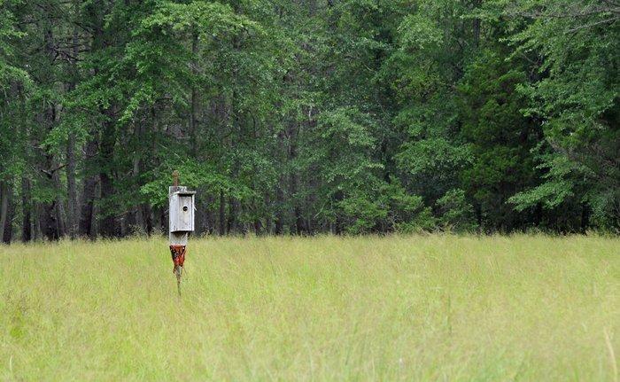 birdhouse.jpg