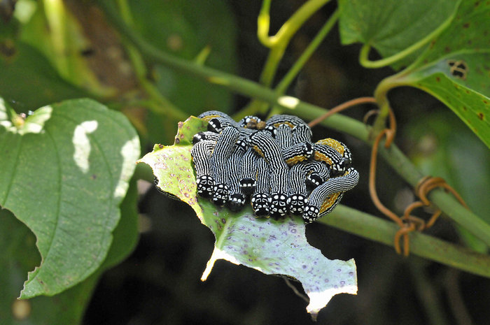 larvae1.jpg