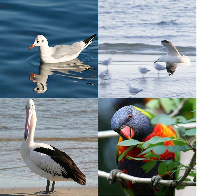 birds-square-format.jpg