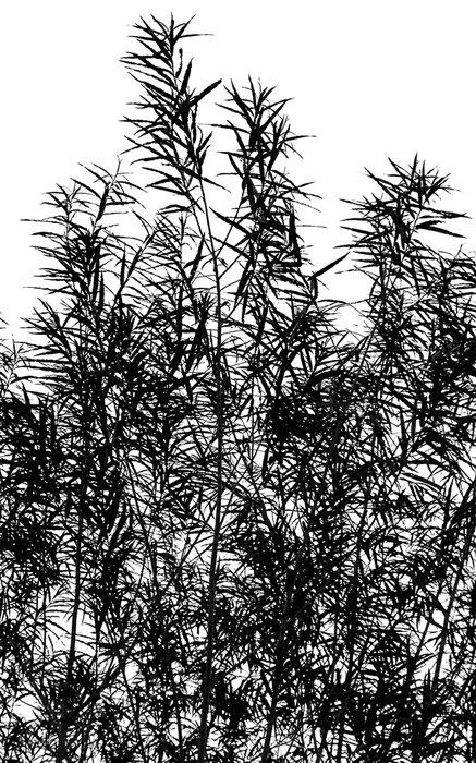 willows-1-.jpg