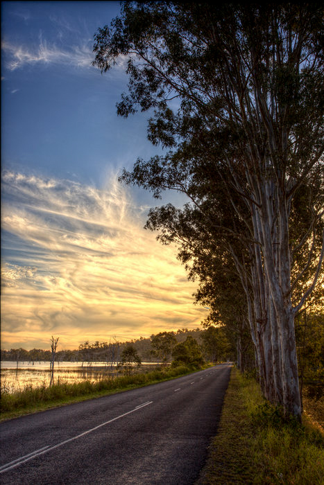HDR - Grey Gums Along The Roadside