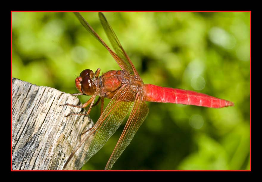 001-dragonfly-web.jpg